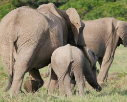 12 Days Best of Kenyan Wildlife Safari