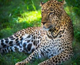 5 DAYS TARANGIRE, MANYARA SERENGETI, NGORONGORO CRATER SAFARI TOUR
