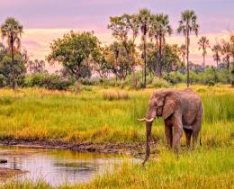 14 Days Best of Kenya Wildlife & Cultural Tour