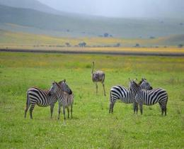 14 Days Best of Kenya Tour