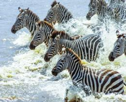 04 Days Best of Lake Nakuru & Maasai Mara