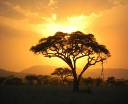 3 Days 2 Nights Maasai Mara Wildlife Budget Safari