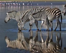 13 Days Kenya & Tanzania Honeymoon combined Wildlife safari tour package.