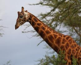 16 Days Best of Kenya & Tanzania wildlife Expedition