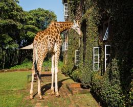 Giraffe Manor-Giraffe Center, Karen Blixen Museum & Kazuri Beads